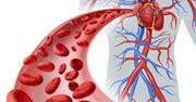 افزایش جریان خون با مصرف منظم 11 ماده غذایی