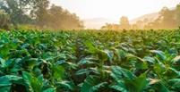 استفاده از ادرار انسان برای کمک به رشد گیاهان در مریخ