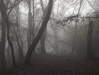 جنگل جیغ از مکانهای ترسناک انگلستان (+تصاویر)