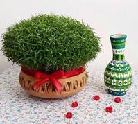 کاشت سبزه عدس, طرز تهیه سبزه عدس